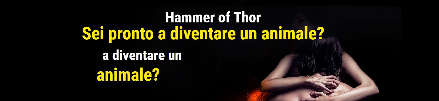 hammer-thor-it